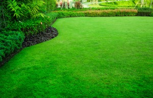 Decorative garden, Green lawn, the front lawn for background.