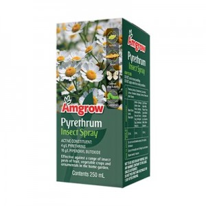 Pyrethrum for www